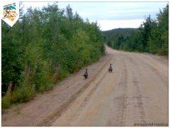 karelia2011-18.jpg